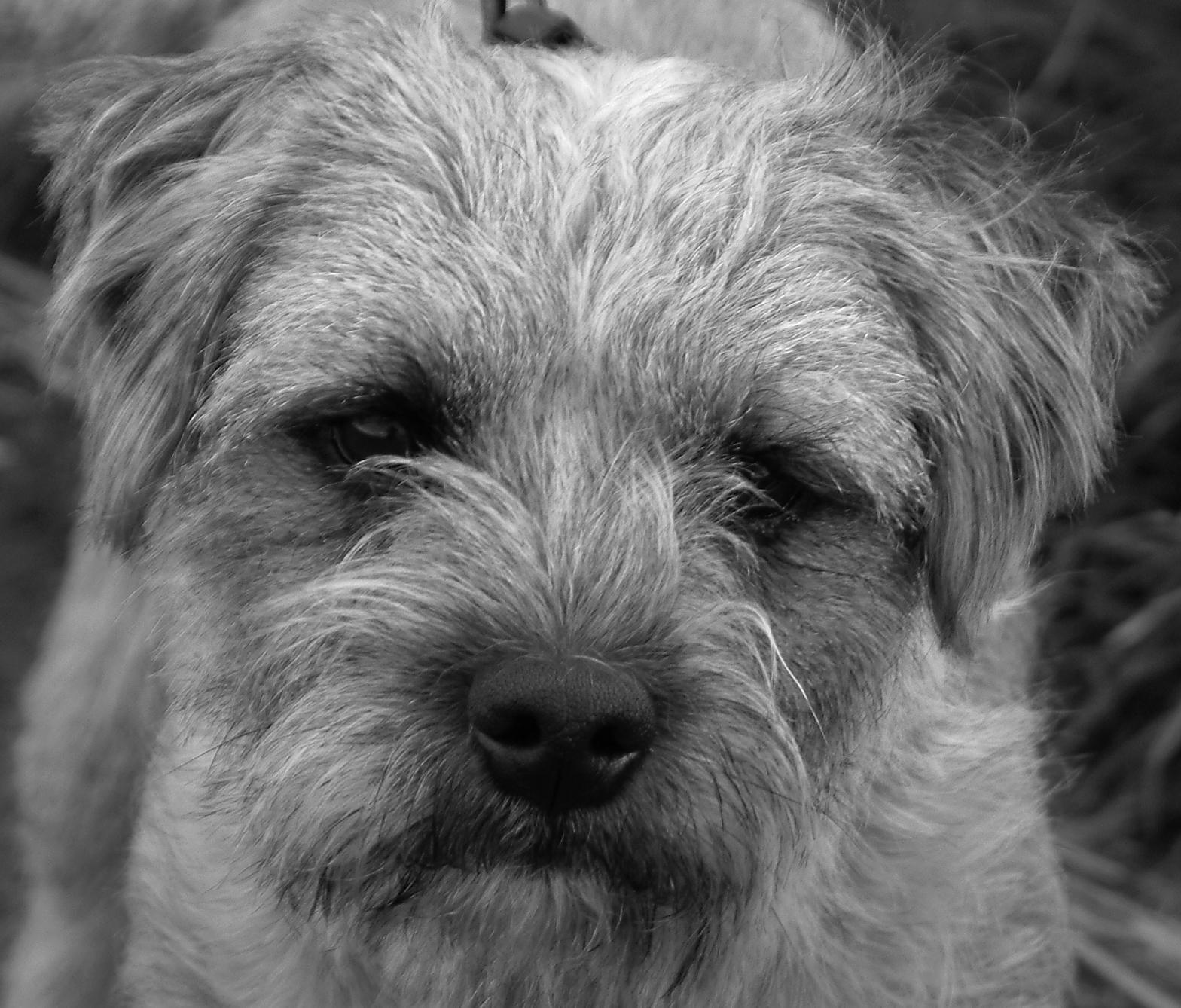 Benji Faze Rug Dog Breed: The Woodlands Dog Park Club 'Treesure' Hunt To Benefit