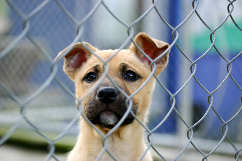 pet abandonment 12062018 caring for pets you must provide  how to care for your pet you must make sure that any animal you own or care for: has a proper diet and fresh water.