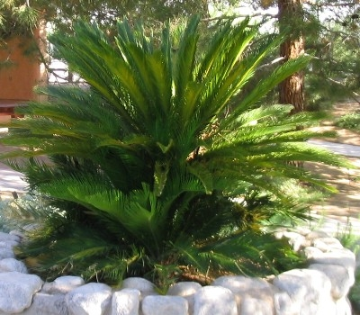 Sarisaringketektyur common philippine flowers and garden for Philippine garden plants