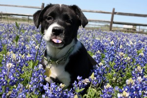 courage-in-bluebonnets-2