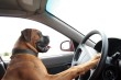 crazy-driver