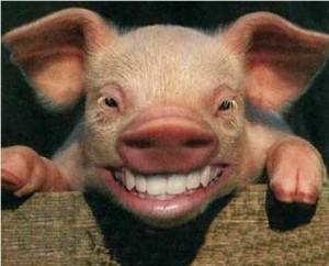 piggy_lipstick