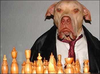 Smart Dog Breeds