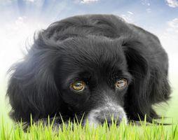 saddog [320x200]