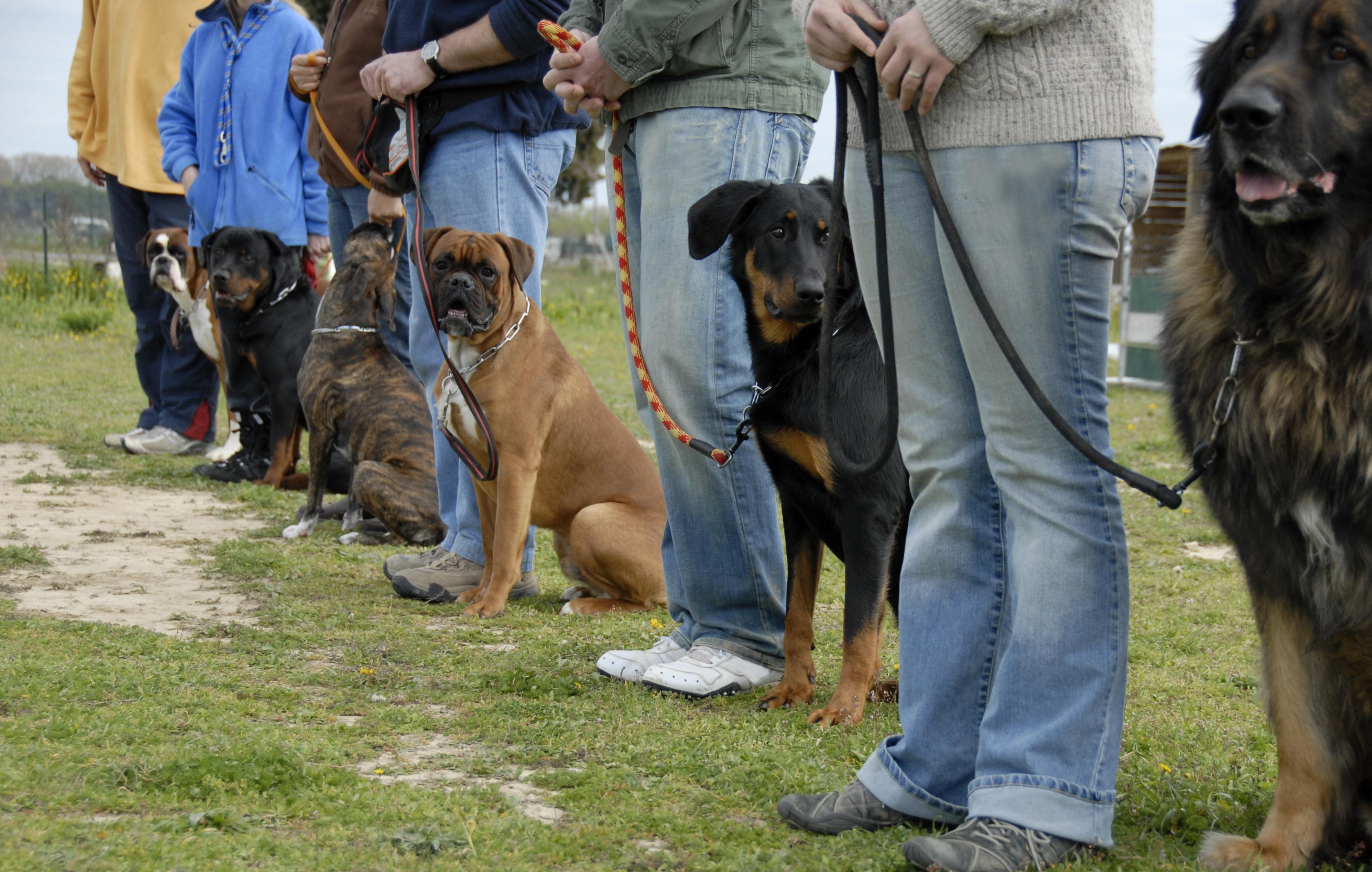 Dog Training Petco Classes