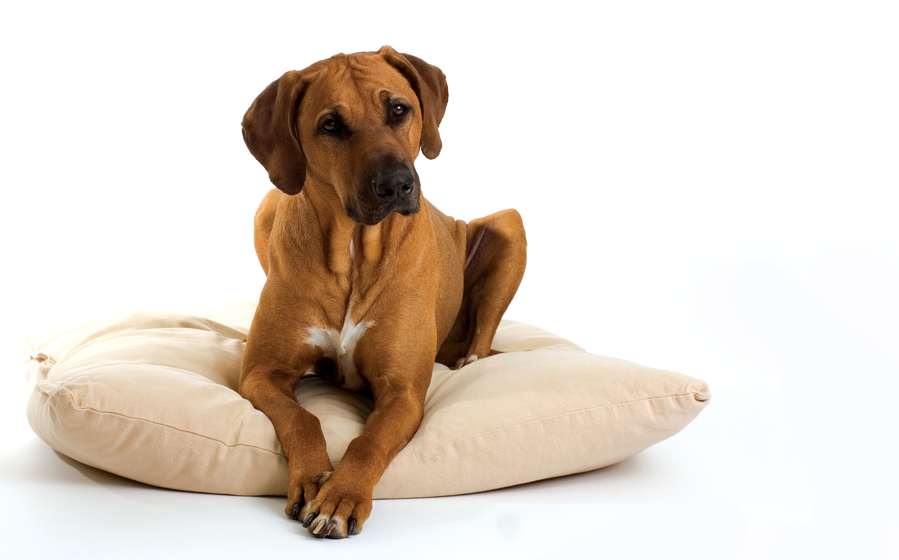 What Is the Most Durable Flooring for Dogs