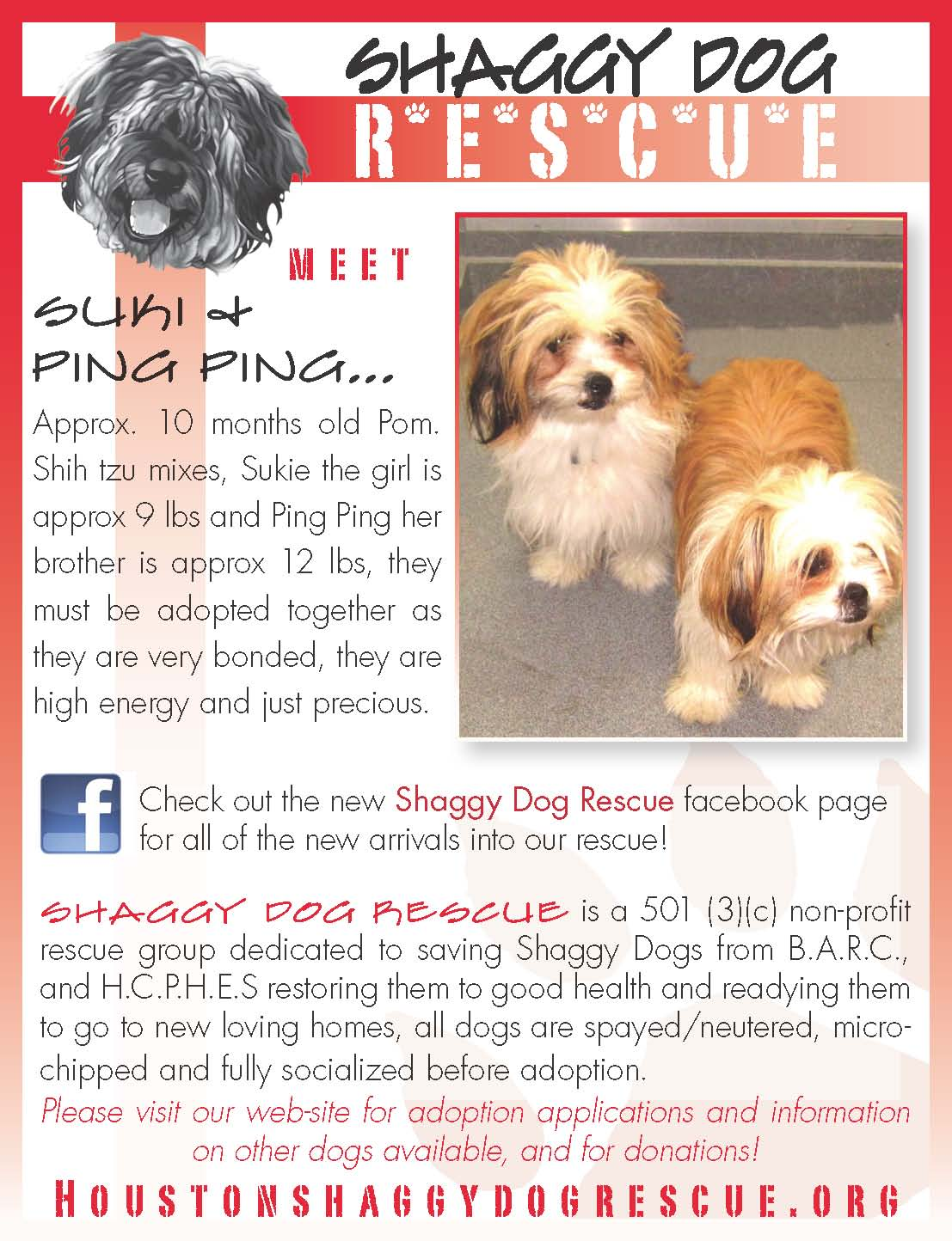 these 2 dogs need a home