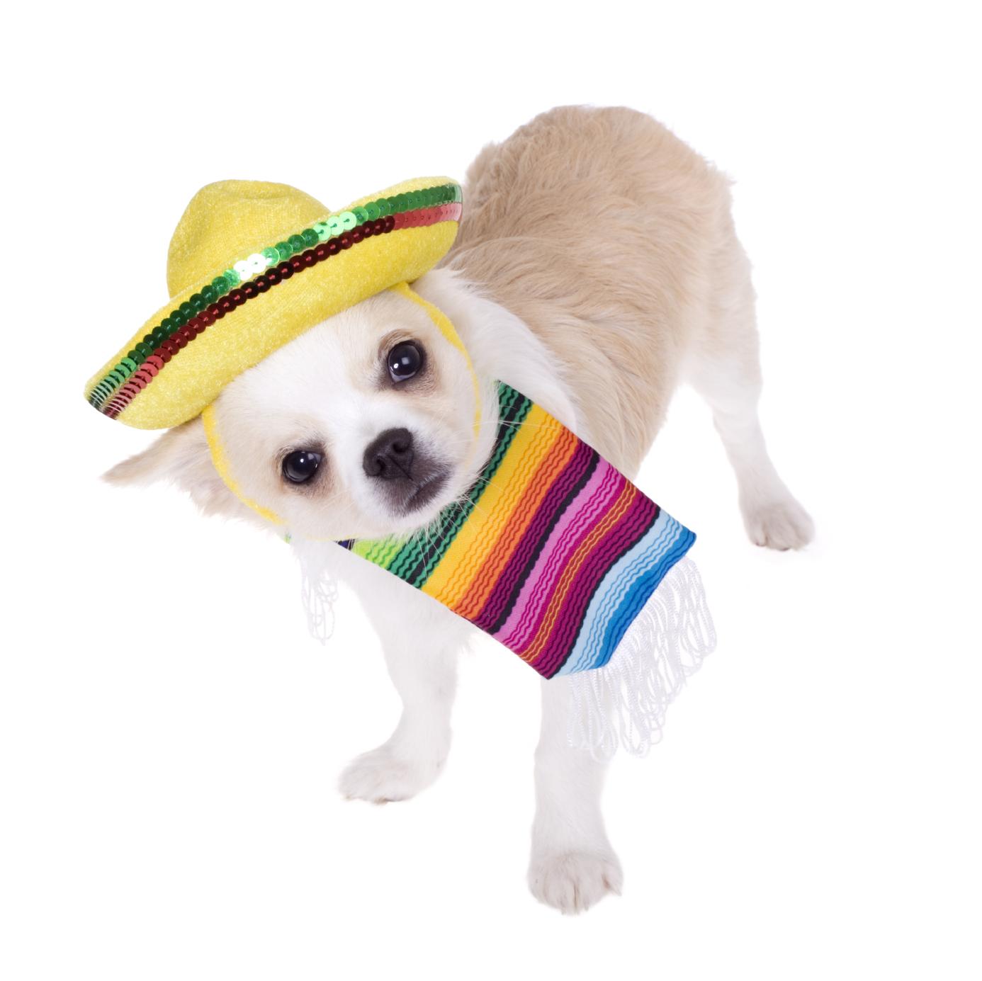 Mexican Dog Breeds: Celebrate Cinco de Mayo | Houston