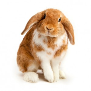 bunny-300x299-1