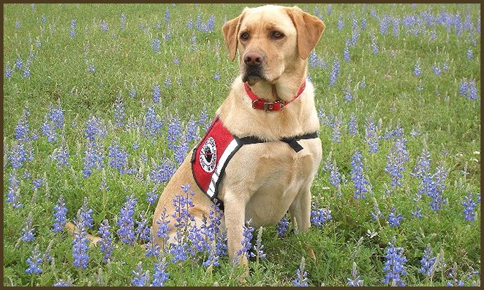 Service Dog For Autistic Child