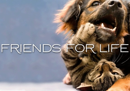 Friends for Life 04