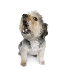 Barking Dog:  The Curse and The Cure
