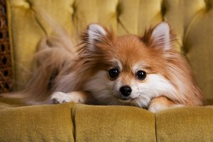 Dog Training for Small Dogs