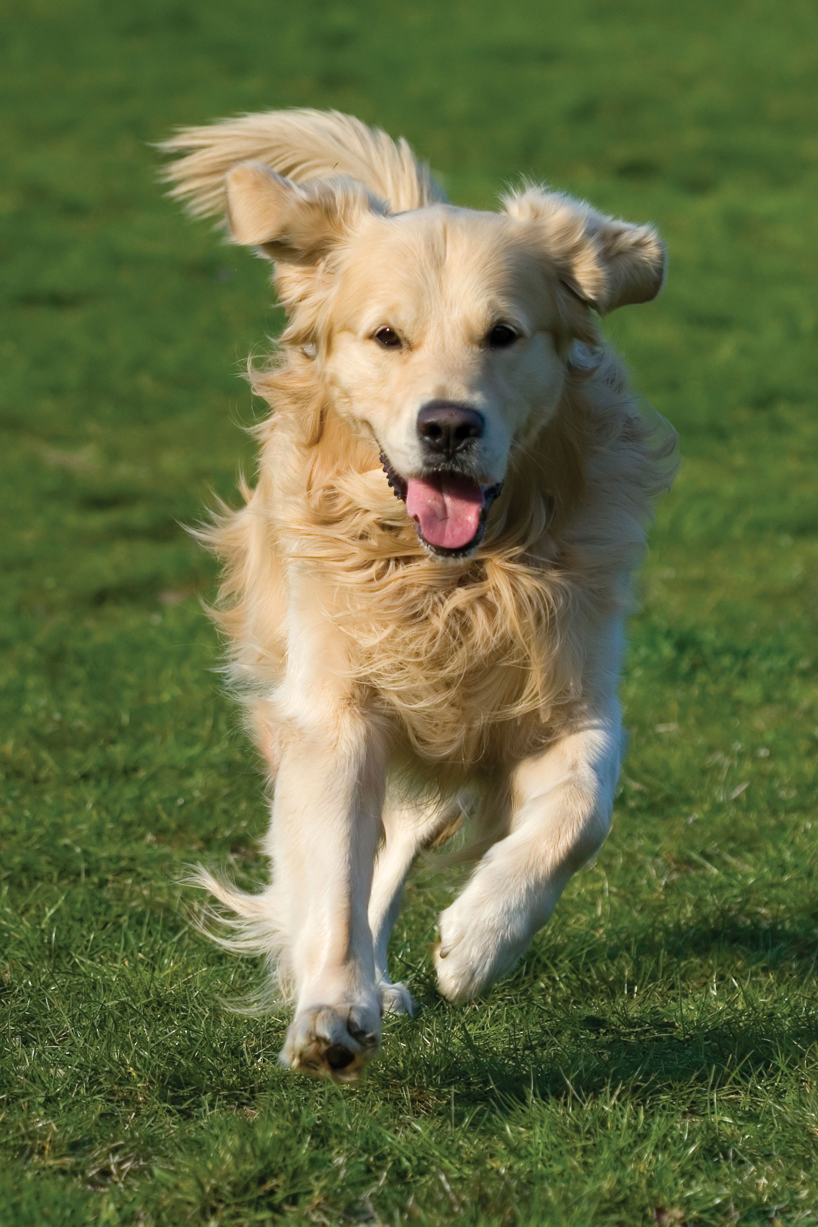 """Using A Professional To """"Run"""" Your Dog 