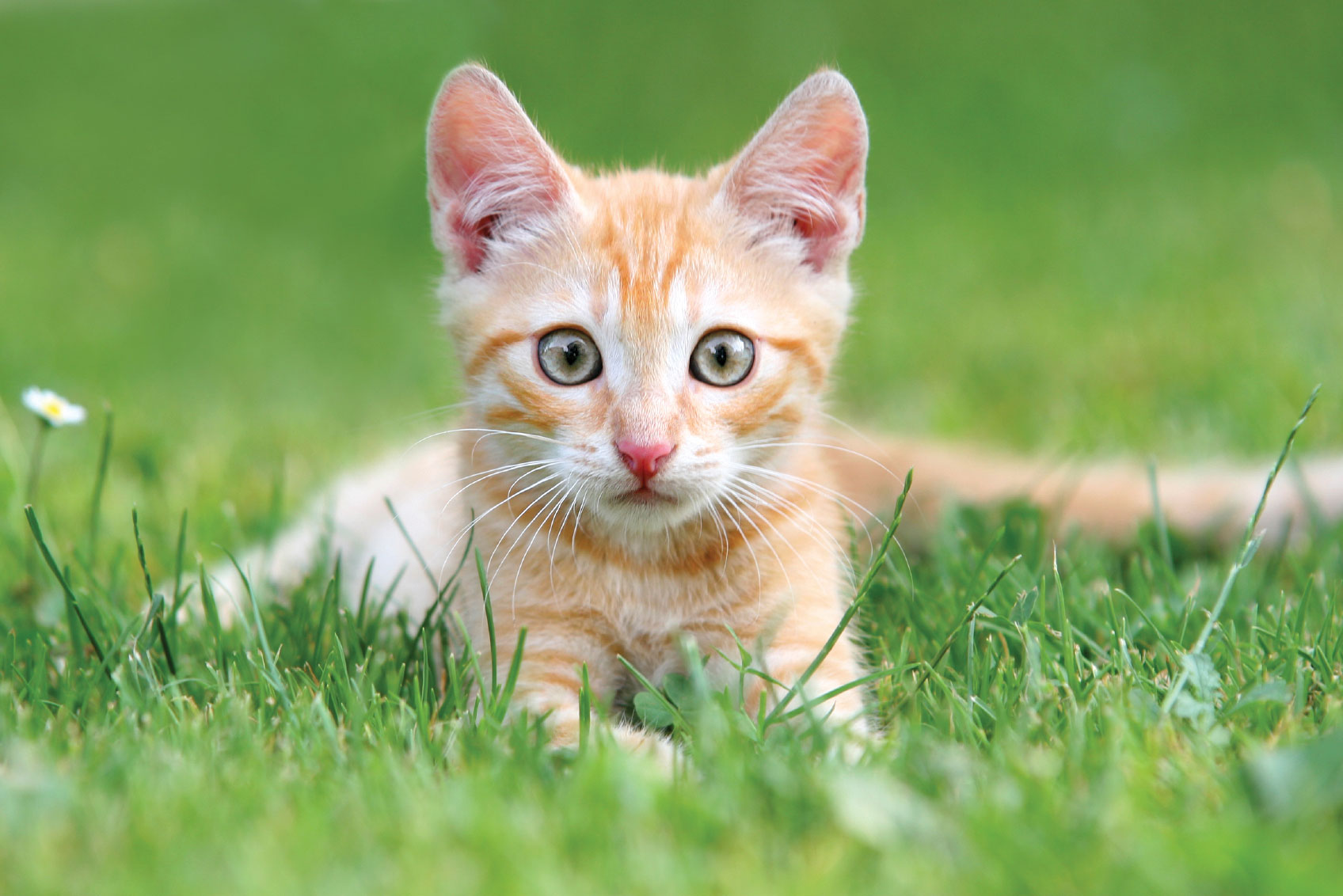 fat kitten