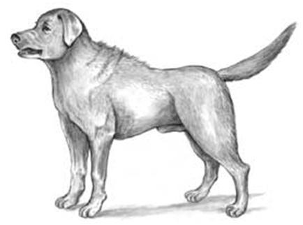 Canine Body Language Let S Break It Down Houston Pettalk