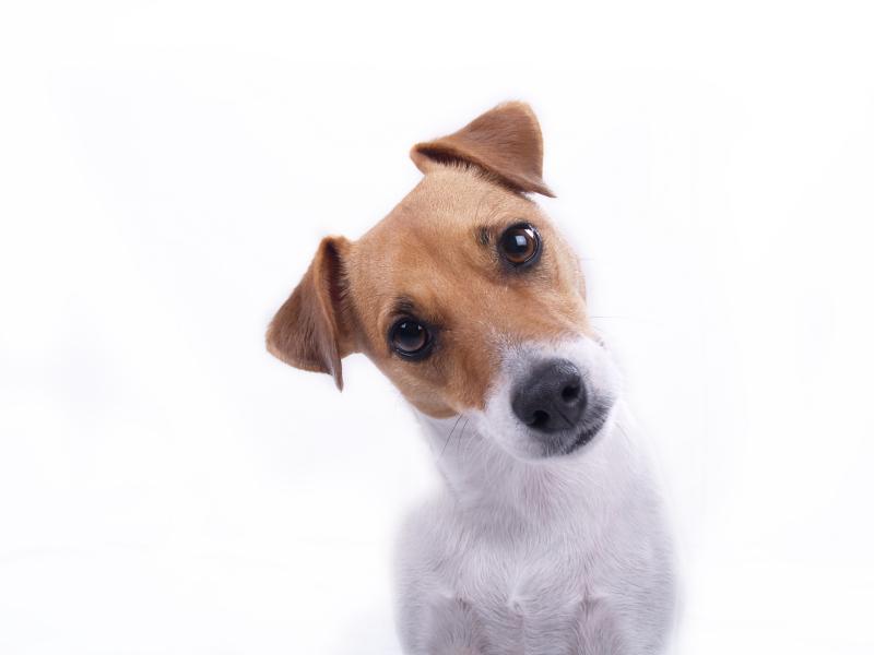 Dog Training Strategies