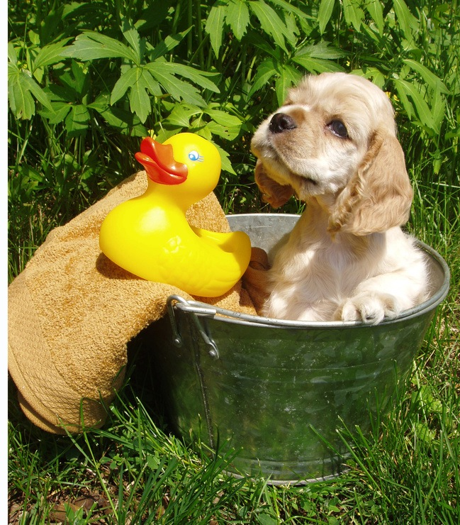 tips for beating the summer heat the natural way houston pettalk