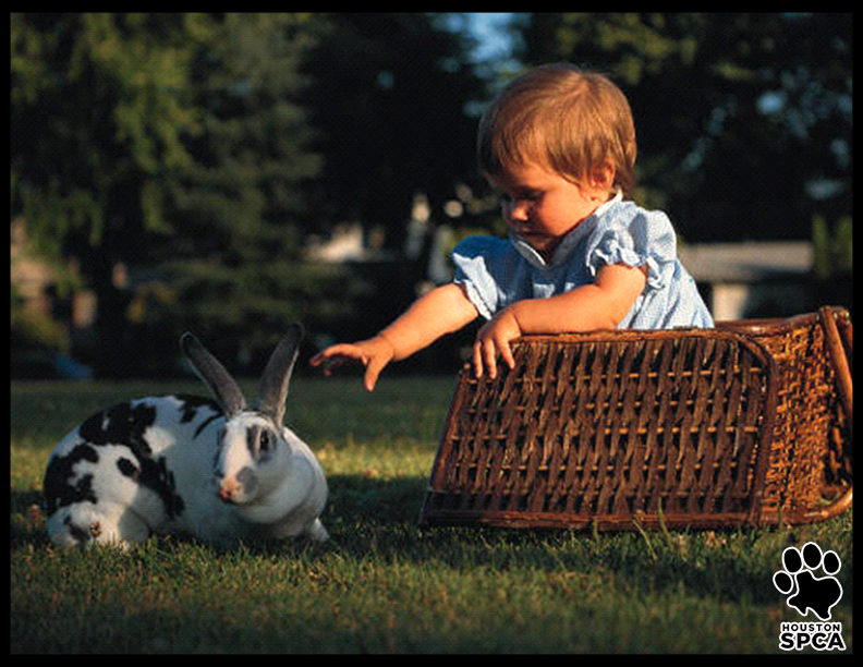 Easter_Pet_Safety_Tips_2