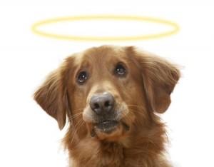 A soulful canine