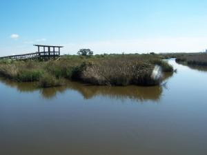 Boardwalk through bayou