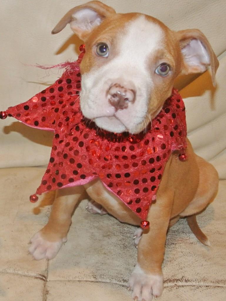 dawn pit pup