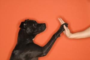 Dog giving woman high five.