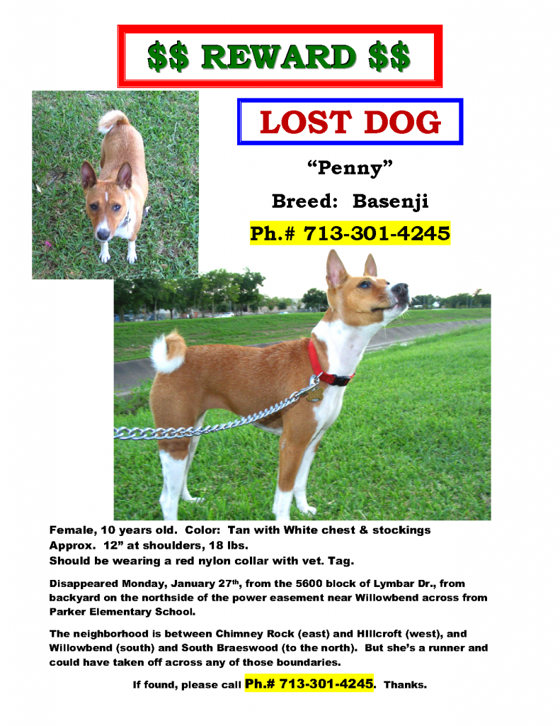 Penny LOST DOG 140213
