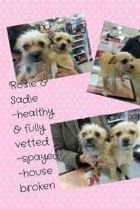 Rosie & Sadie