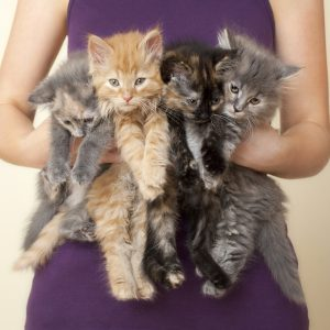 Four Kittens being held by woman