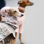 See More Pet Retailers In Houston