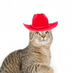 Cute tabby cat with red hat