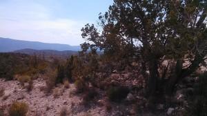 Payson AZ (5) lr
