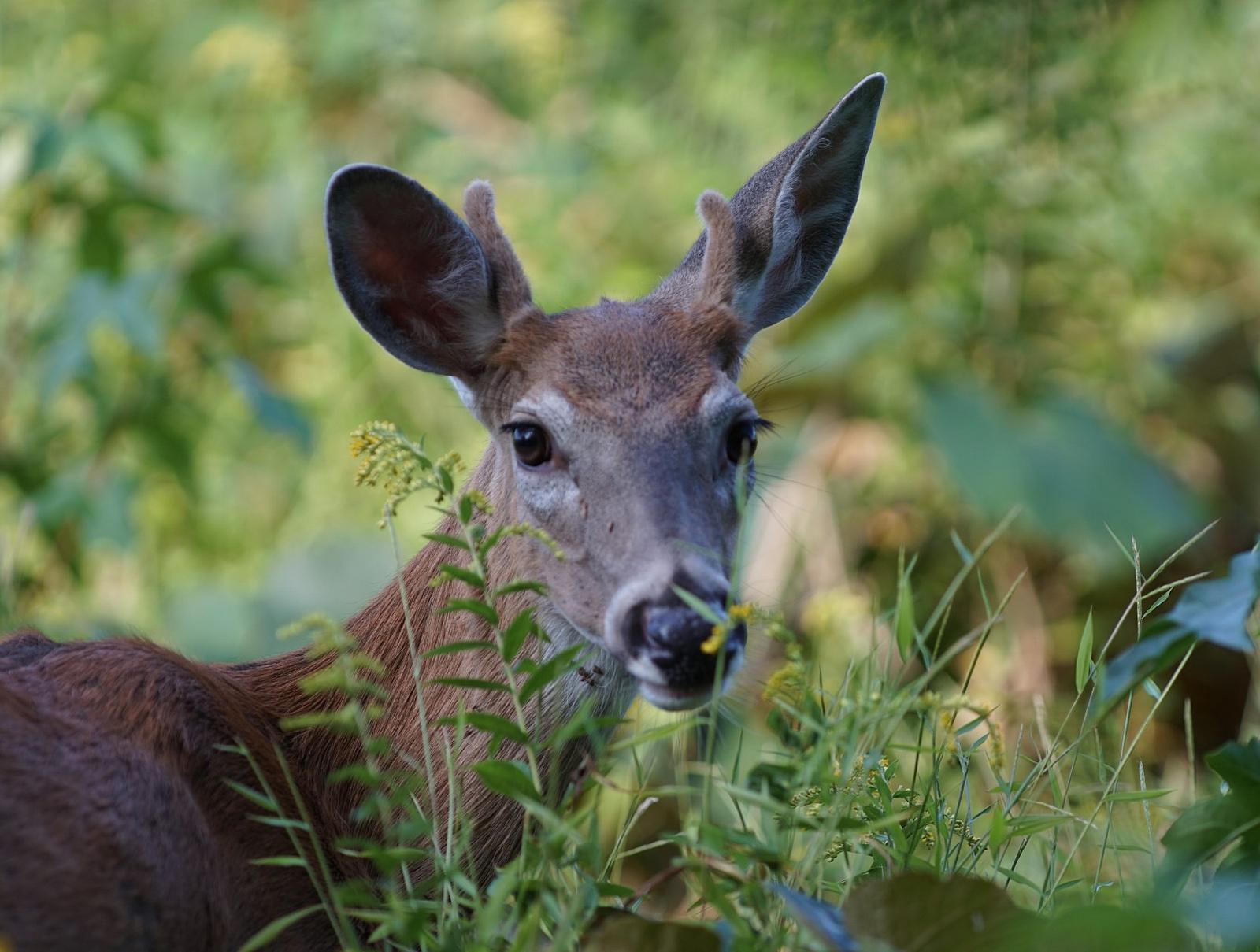 Uncategorized deer antler mounting kit polymer myideasbedroom com