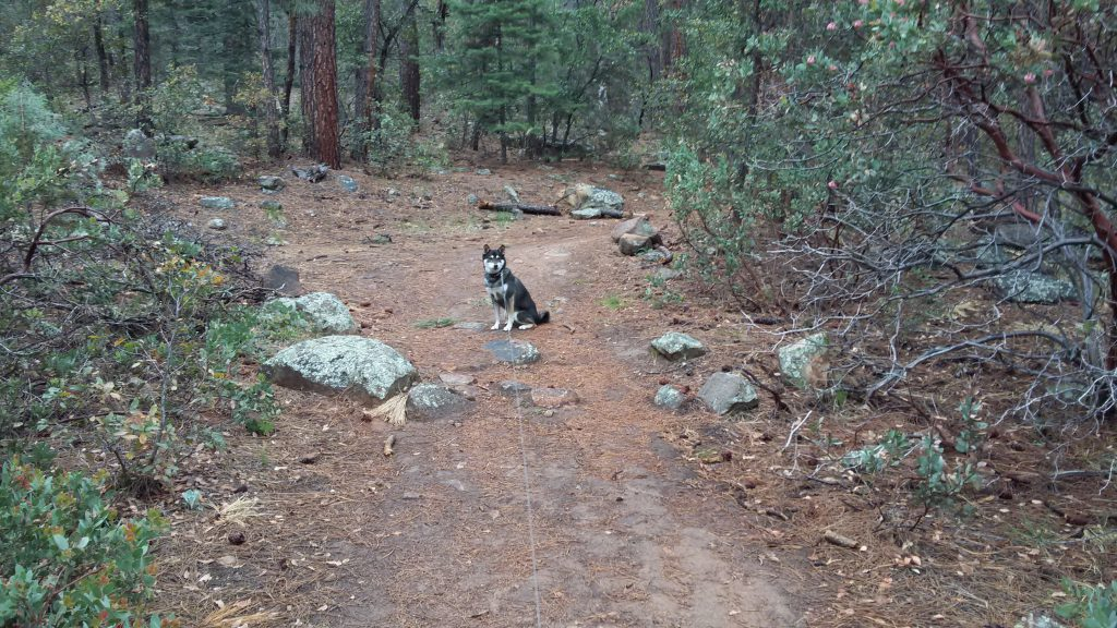 Kuma on trail