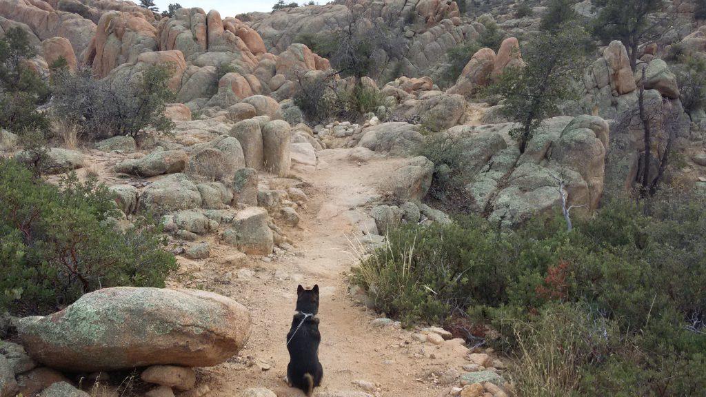 Kuma on trail