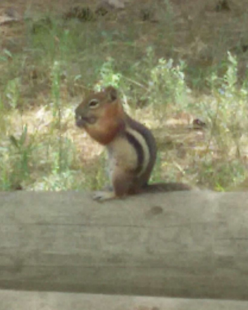 Mr. Chipmunk