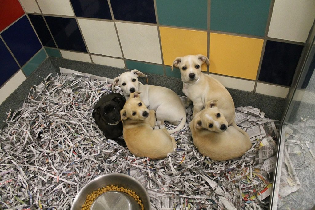 puppies-awaiting-adoption-at-cap
