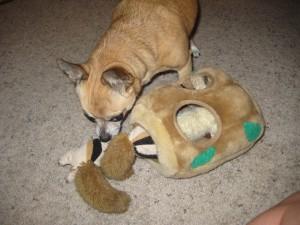 Cowboy loves his hide-a-squirrel