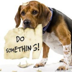 sad_dog_do_something