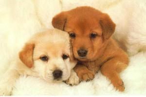 Hi, I'm the new puppy