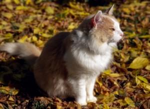 Cat Leaves