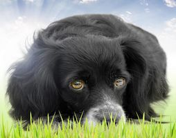 Does your Dog have the Winter Blues?
