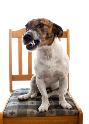 Your Dog Training Questions: My Dog Growls At Me
