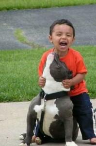 pitbull-and-child-759940