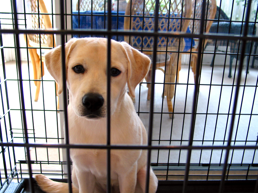 Your Dog Training Questions: How Do I Crate Train My Dog?