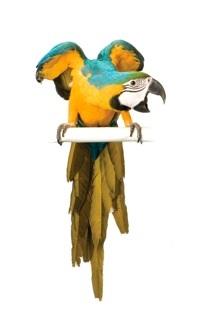 Celebrating 30 Years: Adventures In Birds