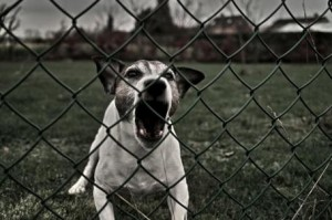 Dog Aggression? Nuisance Barking? Complex Dog Behavior Problems Do Take Time