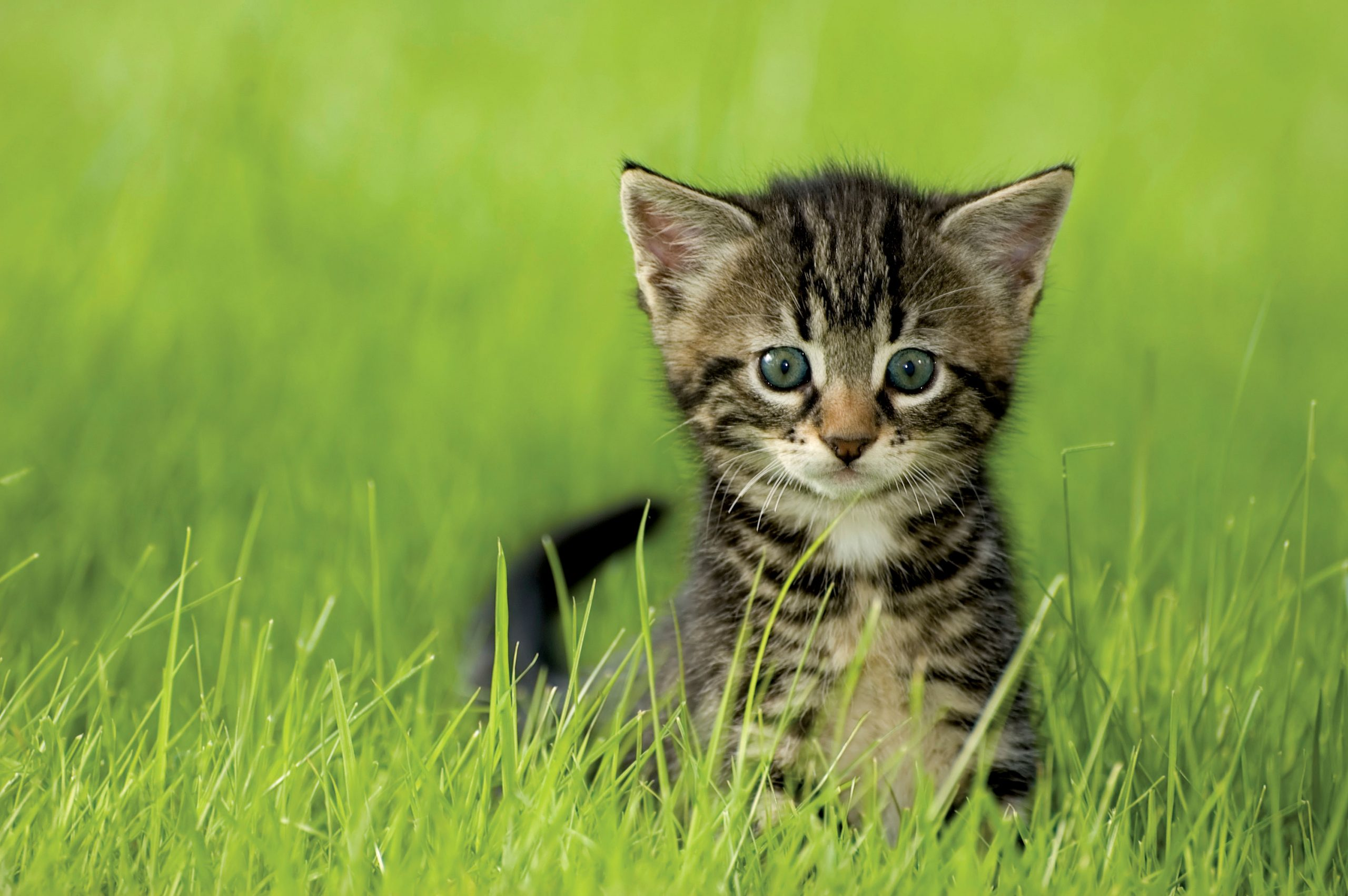Houston: A Nickel To Neuter Your Male Cat On SpayDay!