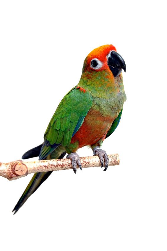 Parrot Festival Jan. 28-30 In Houston